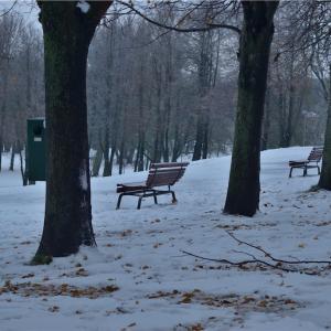 【一日一枚写真】冬に佇む【一眼レフ】