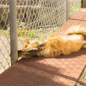 【一日一枚写真】神戸のソマリ猫④【一眼レフ】