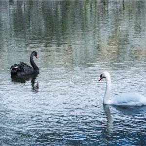 【一日一枚写真】白鳥の湖【一眼レフ】
