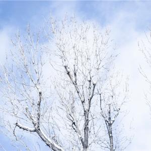 【一日一枚写真】白い季節の樹木【一眼レフ】
