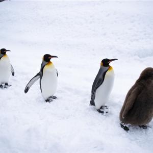 【一日一枚写真】ペンギン達の行列④【一眼レフ】