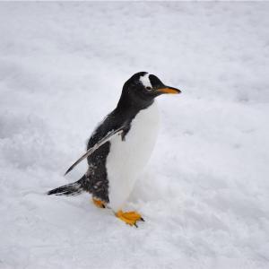 【一日一枚写真】ペンギン達の行列⑤【一眼レフ】