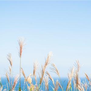 【一日一枚写真】海を望む穂【一眼レフ】
