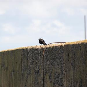 【一日一枚写真】港の鴉【一眼レフ】