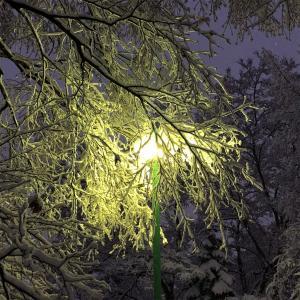 【一日一枚写真】冬のおばけ【スマホ】
