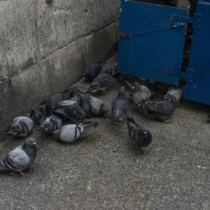 【一日一枚写真】隅に集う鳩達【一眼レフ】