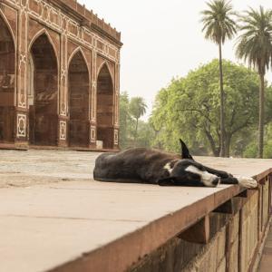 【一日一枚写真】インドの野良犬達 Part.8【一眼レフ】