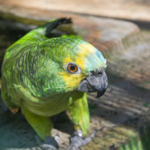 【一日一枚写真】熱帯林のやまびこ達【一眼レフ】