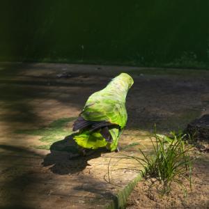 【一日一枚写真】熱帯林のやまびこ達 Part.2【一眼レフ】