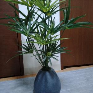 観葉植物(フェイクグリーン)の掃除