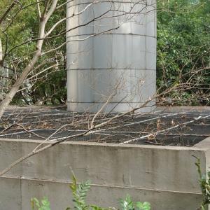 【地下好きの方へ】弁慶濠付近の謎の穴