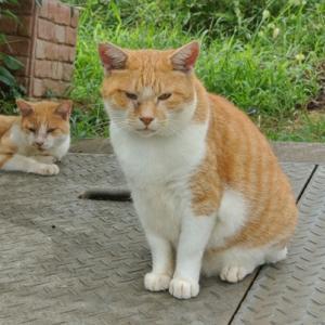 【ネコ好きの方へ】新宿線の上と北千葉線予定地跡付近のネコさん