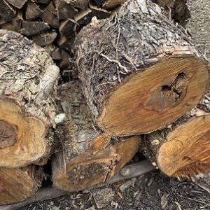 薪用に栗の木を調達