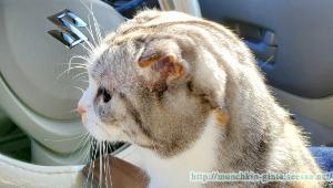 猫ニキビでした…。