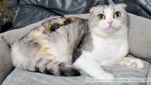 パリピな猫!