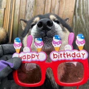 コロの誕生日。
