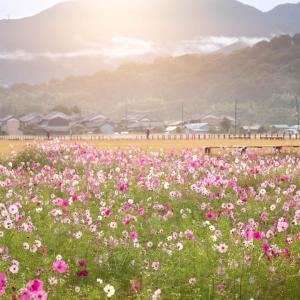 藤原宮跡へまた朝活に行ってきたよ!(2019/10/19)