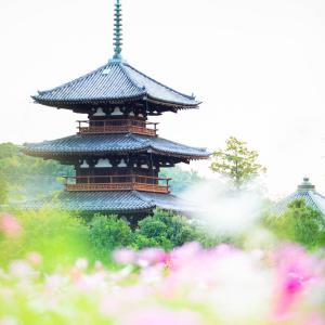 奈良県斑鳩町の法起寺とコスモス