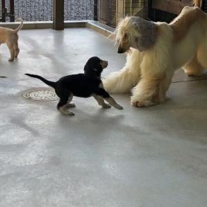 アフガンベビーちゃん お父さんと遊ぶ