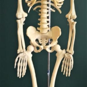 理科室の人体模型は何じん?おもしろ笑楽校探検!(バーチャル学校探検編)