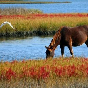 【タイで乗馬】カオヤイの山の牧場で田園風景の中の乗馬にツアーで楽々参加