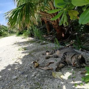 バンコクからの沖縄①まるで猫島?【神の島・久高島】