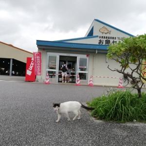 バンコクからの沖縄②美味しいお刺し身が食べられるところ
