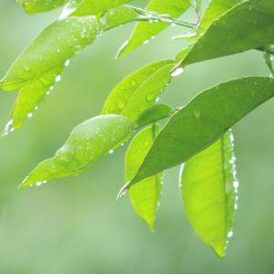 明日の希望|梅雨は降り梅雨は晴るるといふことを