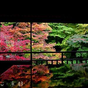 どんなとこ?混雑具合は?京都で1度は観たい紅葉の瑠璃光院