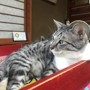 岩合光昭世界ネコ歩き「ねこの京都」がLINEスタンプになってる❤️