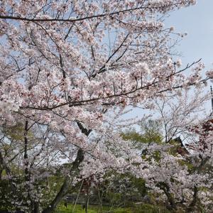 祇園甲部 「春の雅」 京舞公演と庭園公開で2021年の春を迎えよう
