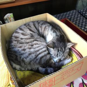 岩合光昭・世界ネコ歩きに登場した船はし屋のかわいい猫店長と絶品豆