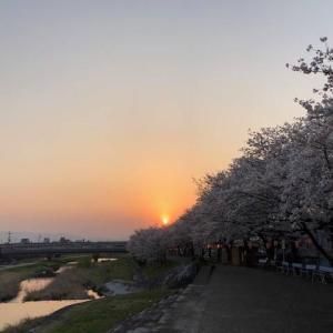仏教伝来の地・海拓榴市周辺【桜を見ながら往時を偲ぶ】