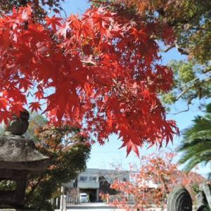 紅葉の季節に…聖徳太子ゆかりの「龍田神社」