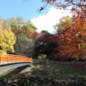 もみぢ葉は竜田の川の錦なりけり~紅葉の名所・竜田公園