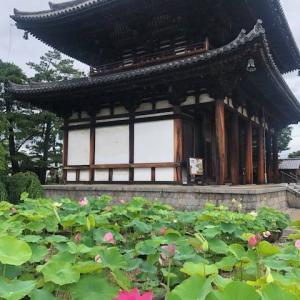 喜光寺~行基菩薩の寺は蓮の季節がおすすめ