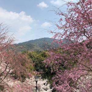 大和国一ノ宮 大神神社のご神体・三輪山に ご登拝してきました