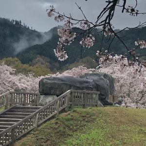 桜が彩る石舞台古墳・飛鳥寺・橘寺
