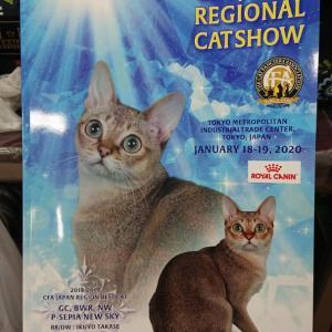 CFA cat showとこにゃん