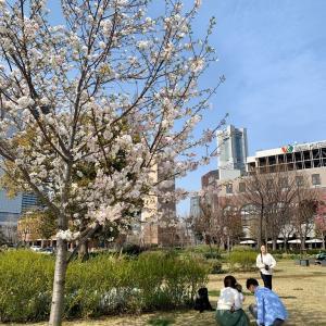 横浜⚓️みなとみらい「散策するだけで幸せ満開。」写真館