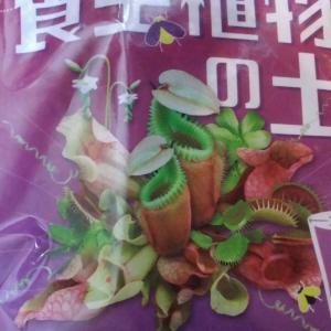 「食虫植物の土」を買う