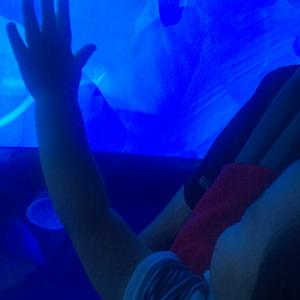 「東京金魚ワンダーランド」を開催中のすみだ水族館に行ってきました