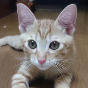 【AC】生まれ変わりの猫のお話し