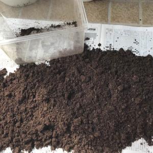 19年10月3日 | ノコギリクワガタのマット掘り起し。幼虫は見つからず(泣)