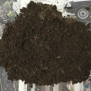 19年11月13日 | ノコギリクワガタのマット割り出し。幼虫はゼロ(泣)