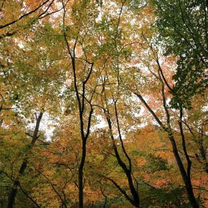 秋のお山へ…