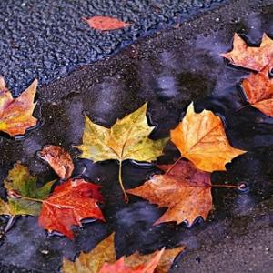 隣家の落ち葉が大量侵入で大迷惑も、苦情は言えない戸建の悲哀。