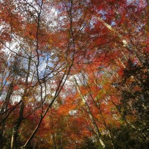 2019年11月30日 奥久慈(抱返し滝-444P)3