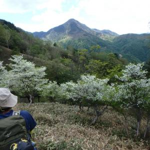2021年5月30日 丸石沢(ゴケナギ沢)左俣・オロ山(足尾)1