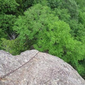 2021年6月6日迦葉山・鉱石山